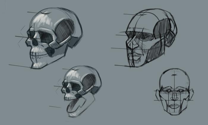 2016 Skull Study